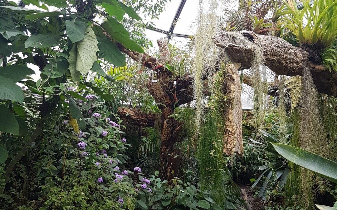 Zurich: The Botanical Gardens