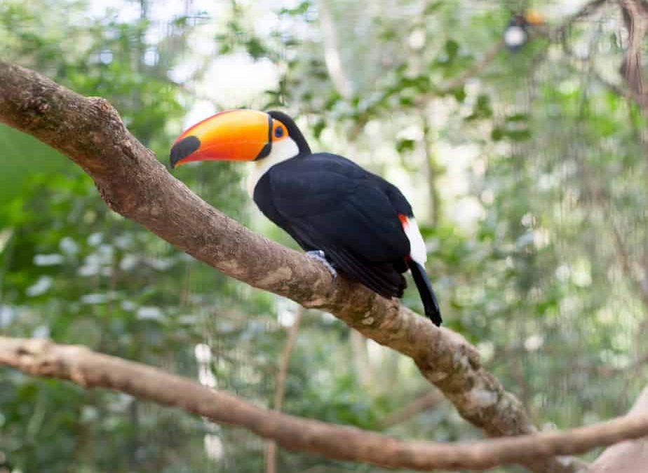 Brazil: The Iguassu Falls Bird Park