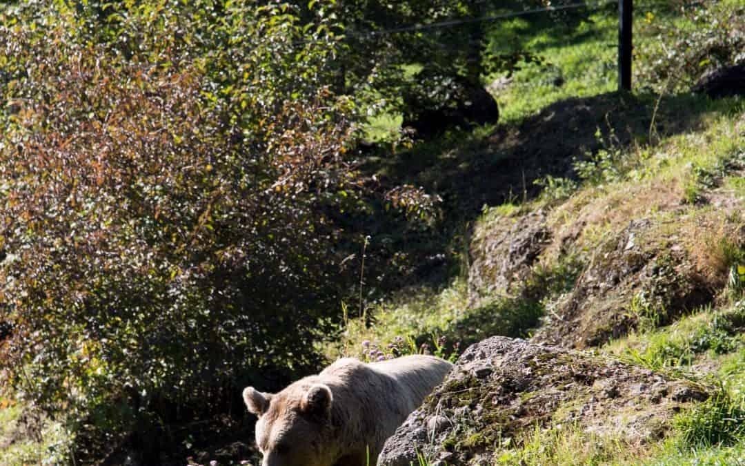 Schwyz: Goldau Tierpark