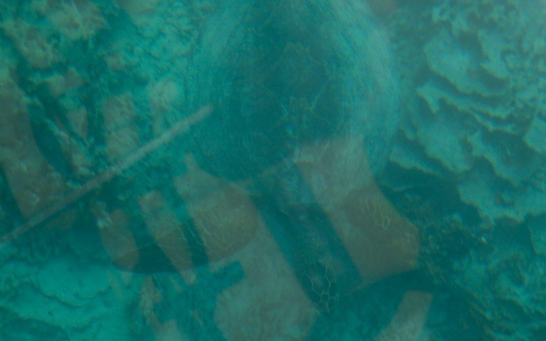 Mauritius – The Glass Bottom Boat