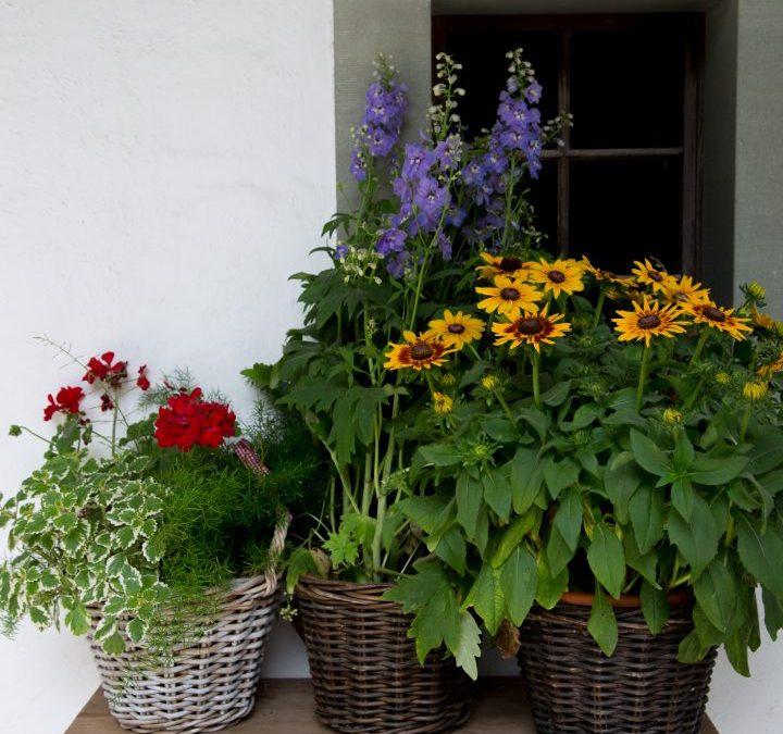 Friday Flowers – Swiss Market